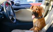 特斯拉正研发狗狗模式 保护留在车内的宠物狗安全
